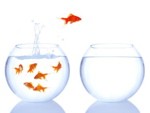 change-fish.jpg